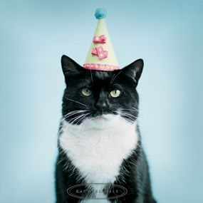 People Always Want To Know How Old Their Dog Or Cat Is In Human Terms The Rule Of Thumb For Dogs Has Been One Year Equals Seven Years