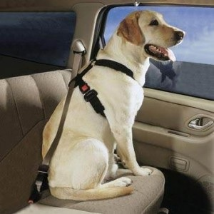 The use of a dog seat belt not only keeps a pet from interfe